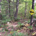 Photo of a yellow sign post with an arrow pointing down a trail in the woods